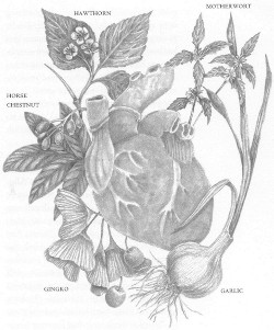 Heart drawing with herbs specific to cardiac health