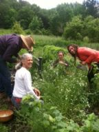 Foundations of Herbal Healing at Heartsong Farm: Hands on learning with the plants.