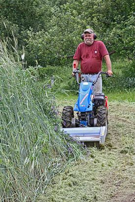 Photo from Mycorrhizal Planet: The flail mower attachment for the BCS walking tractor quickly converts a stand of winter rye and hairy vetch to fine mulch without disturbing root systems.
